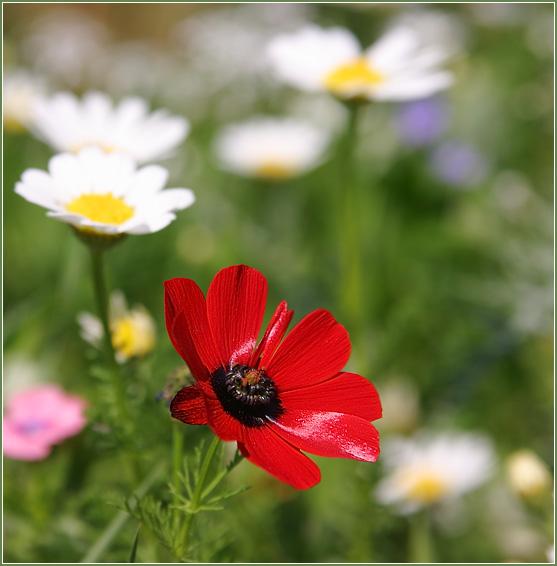 http://www.nikolsky.name/10/flowers_10_8_sm.jpg